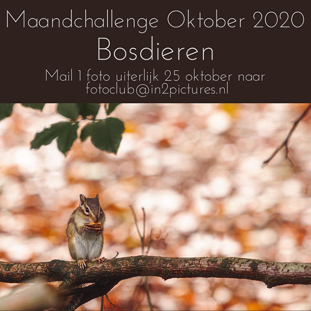 Maandchallenge oktober 2020 - Bosdieren