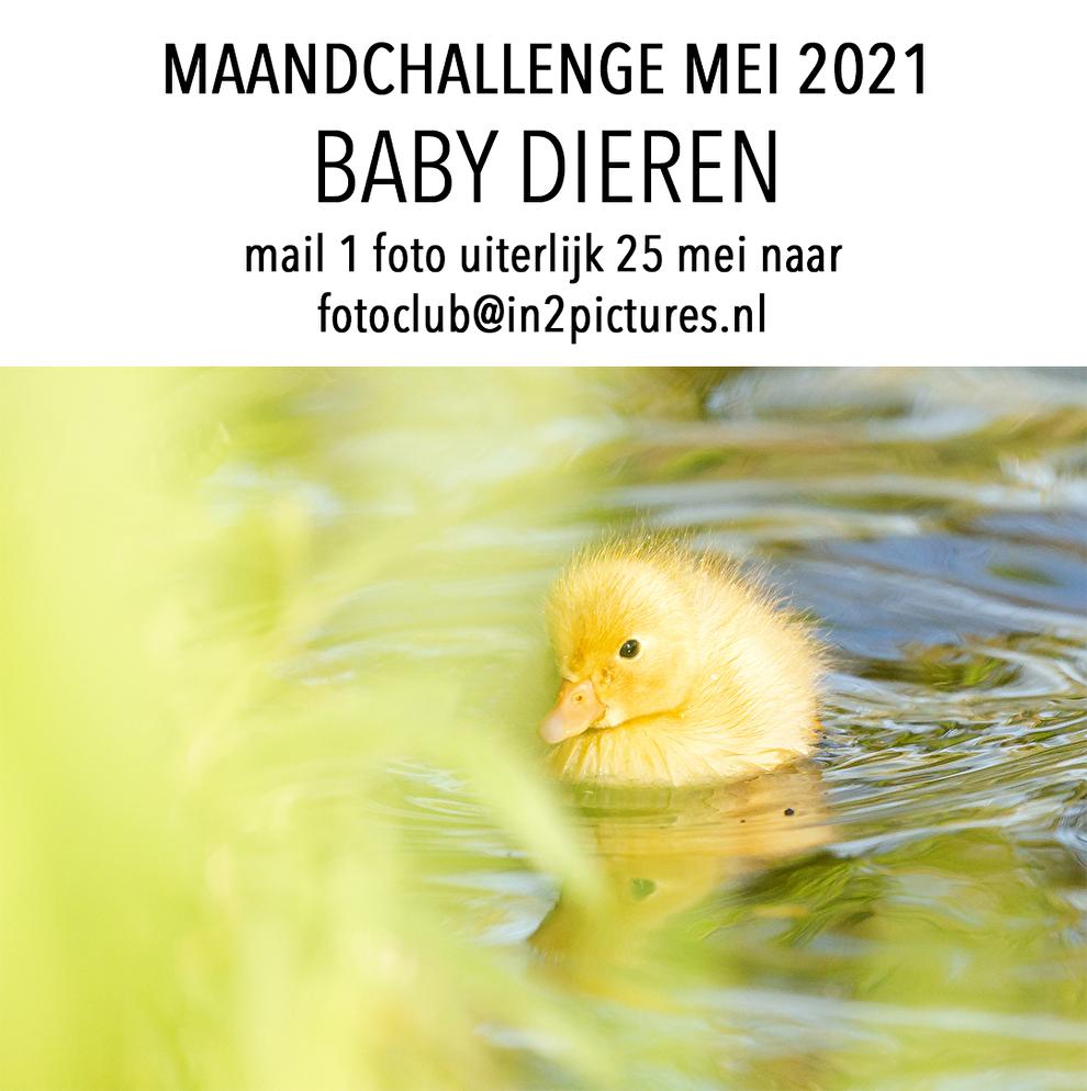 Maandchallenge fotografie fotoclub baby dieren