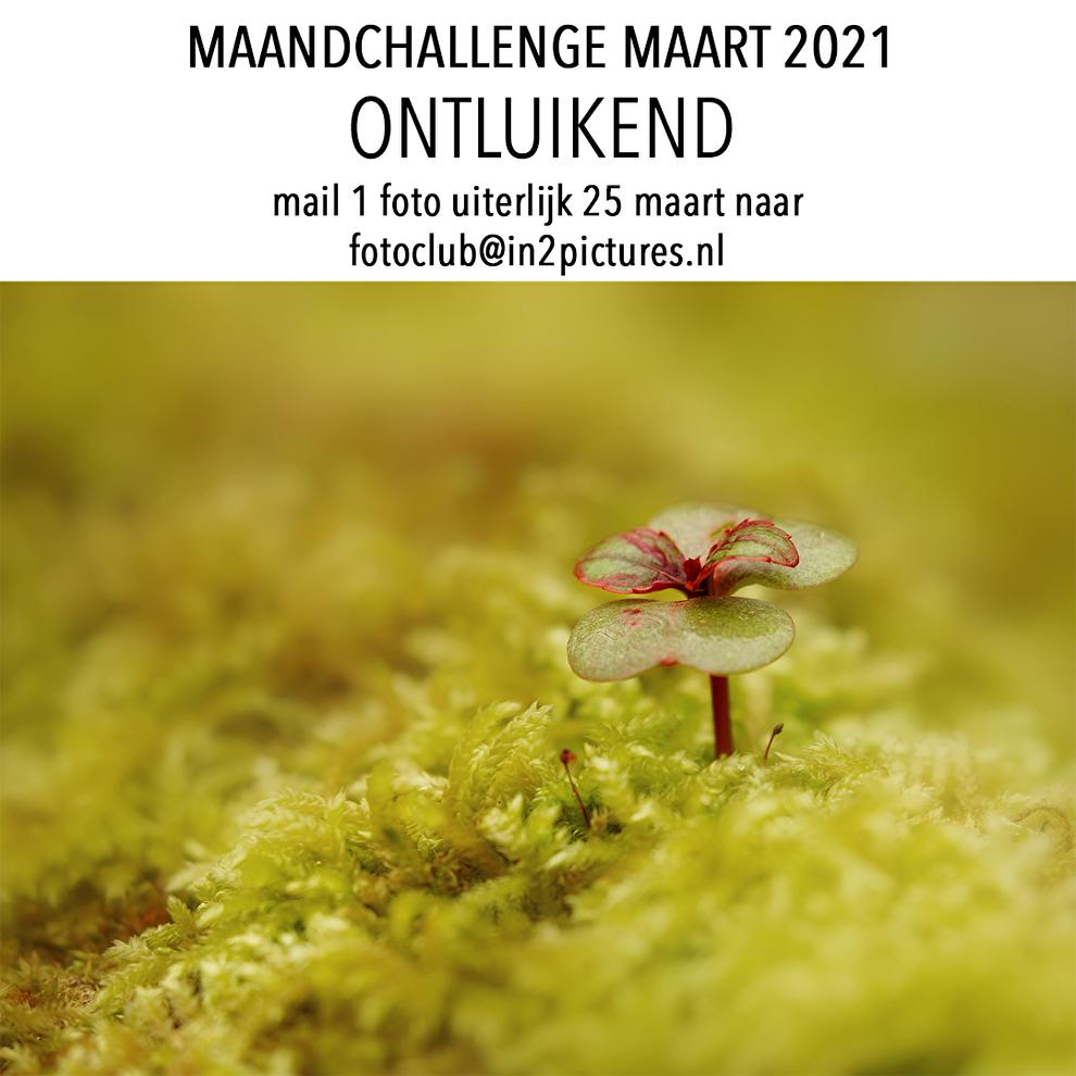 Maandchallenge maart - ontluikend in2pictures.nl fotografie