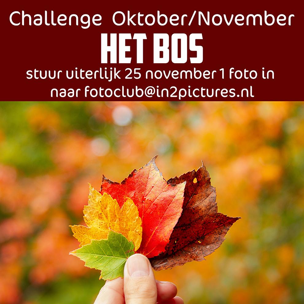 Foto challenge het bos in2pictures.nl fotoclub
