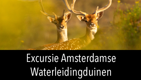 Workshop digitale fotografie in2pictures.nl fotografie - excursie Amsterdamse Waterleidingduinen
