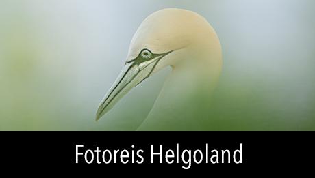 Fotoreis Helgoland met in2pictures.nl fotografie