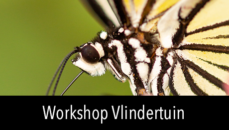 Workshop in2pictures.nl fotografie Vlinders fotograferen in de vlindertuin