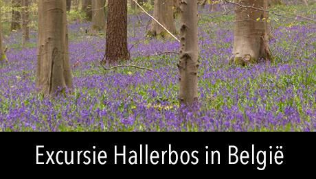 Workshop in2pictures.nl fotografie Excursie naar het Hallerbos in België