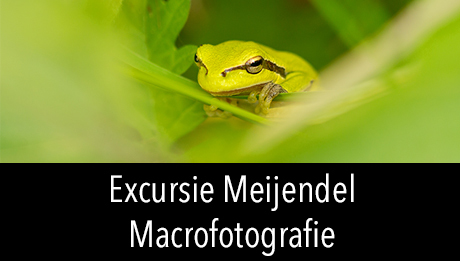 Workshop in2pictures.nl fotografie Macrofotografie in de Libellenvallei