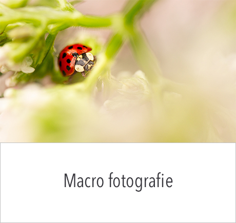Workshop Macrofotografie