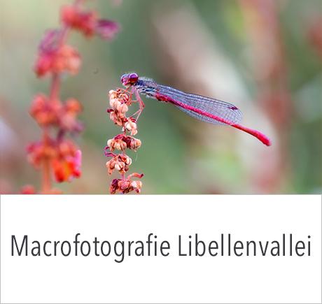 Macrofotografie in de libellenvallei met in2pictures.nl fotografie