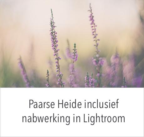Workshop Paarse Heide inclusief nabewerking in Lightroom