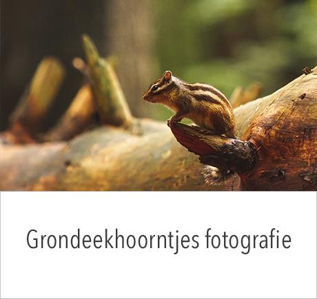Workshop Grondeekhoorntjes fotograferen met in2pictures.nl fotografie