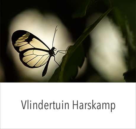 Fotografie workshop Vlindertuin Harskamp