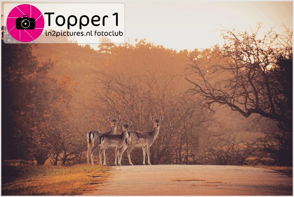Topper 1