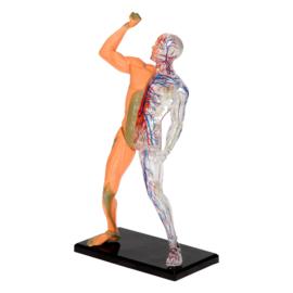Science Explorer Ontdek je eigen Lichaam - Spieren