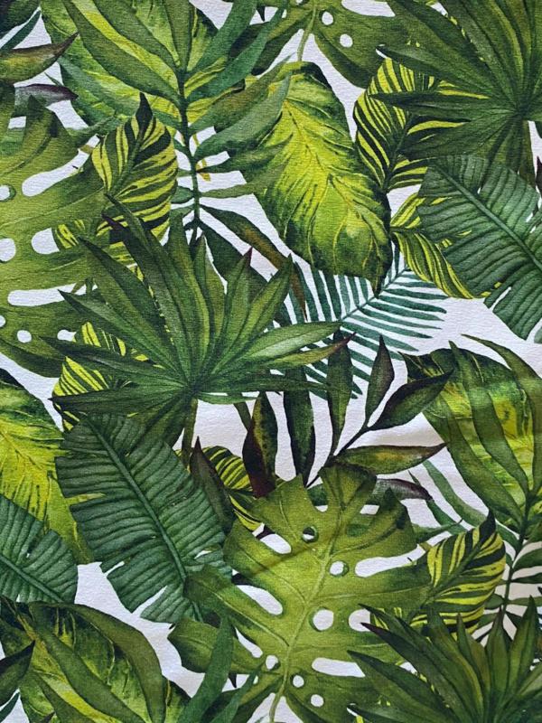 Colsjaal Leaves