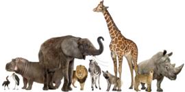 Muurstickers dieren groep - Muurstickers dieren