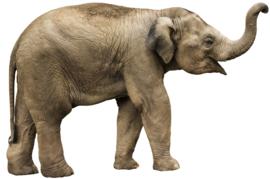 Muursticker olifant - Muurstickers dieren
