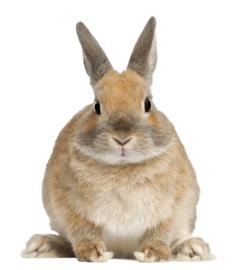 Muursticker met konijntje - Muurstickers dieren