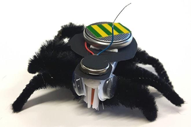 Maak het deze zomer - spin 1