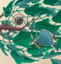 Zoïcophytus Anemophorus