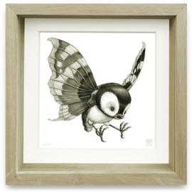 Psychornis Leucopsis