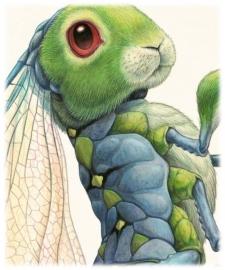 Libellula Lagoformosa