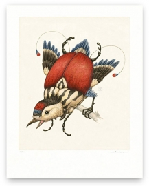 Garrulus Clipeatus (print)