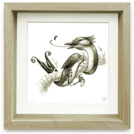 Oxylophus Dendrostrophus