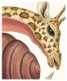 Giraffa Cochleanata