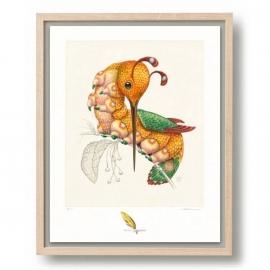 Peripatus Mellirostratus (framed)