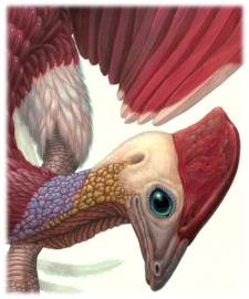 Dromopterix Elephoenicus