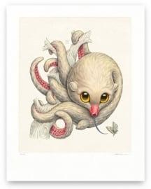 Octopossum Leucostolum (Print)
