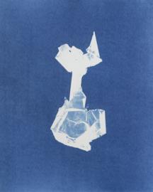 Colpomenia peregrina (Oesterdief)