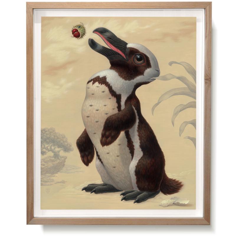 Pinguilagus Pseudopticus