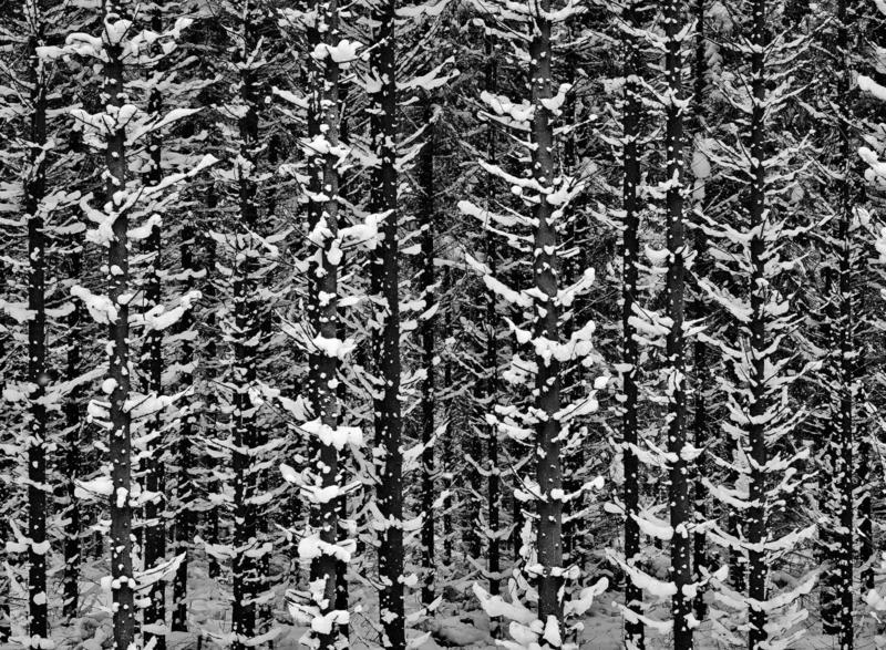 Spruce network