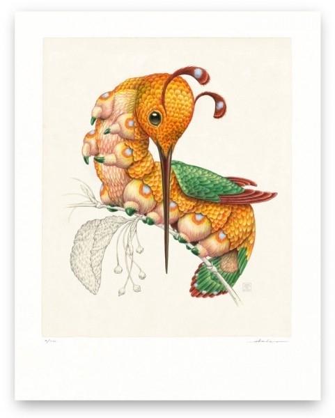 Peripatus Mellirostratus