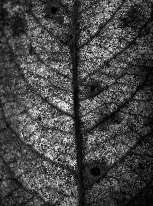 Tree-leaf-tree