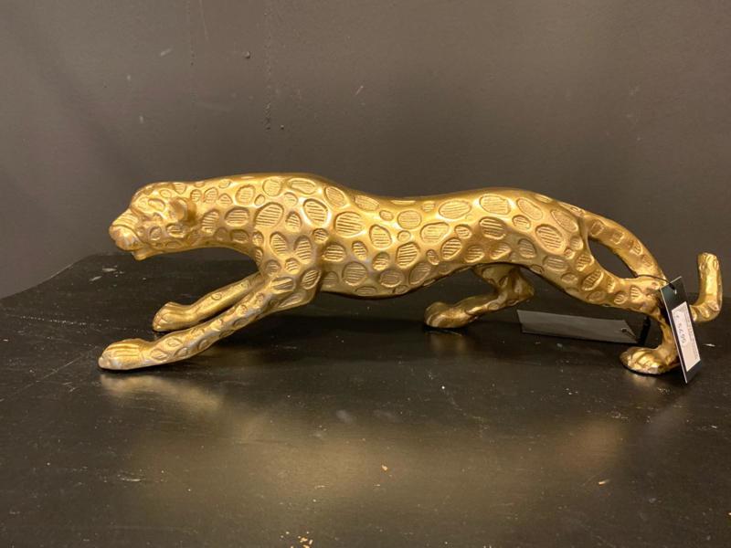 Colmore luipaard L goud