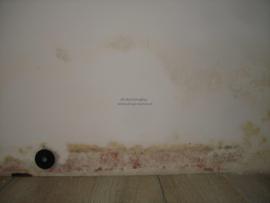 schimmel op de muur