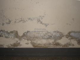 verf bladdert af
