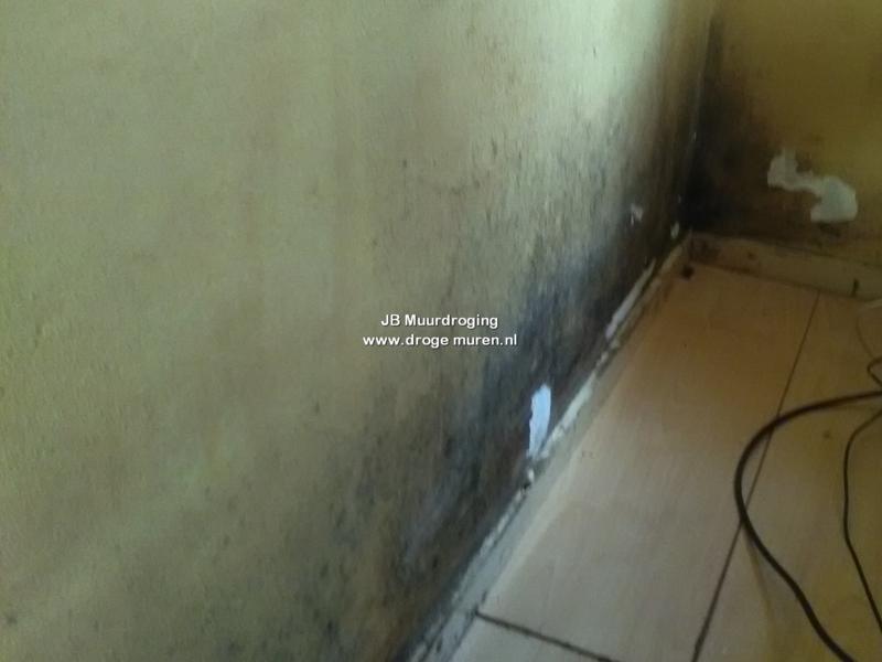schimmels op de muur