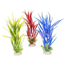 Plant Amazon Sword M 30cm