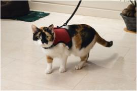 Katten Loopharnas Comfort met Looplijn en Belletje