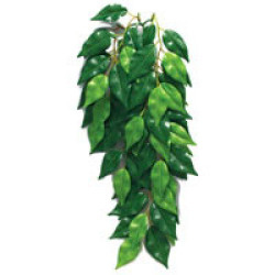 Jungle plant, Ficus silk medium