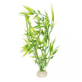 Plant Bamboo M 27cm