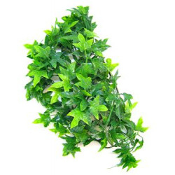 Zoomed Natural Bush - Congo Ivy -Small - 36cm