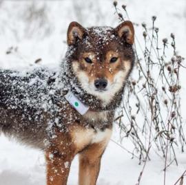 Weenect GPS Tracker Hond - met Triller en Bel