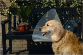 Hondenkraag Plastic 22-25cm x 7,5cm