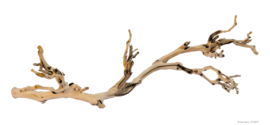 Exo Terra Forest Branch Large - 60cm
