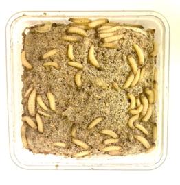Bakje Wasmotten met Voeding