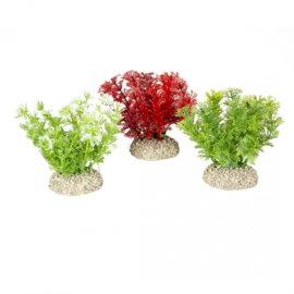 Plant Hottonia S 10cm