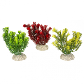 Plant Canadensis M 23cm